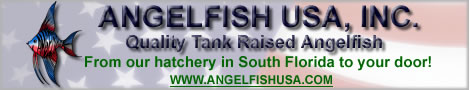 Angelfish USA, Inc. Quality Tank Raised Angelfish.